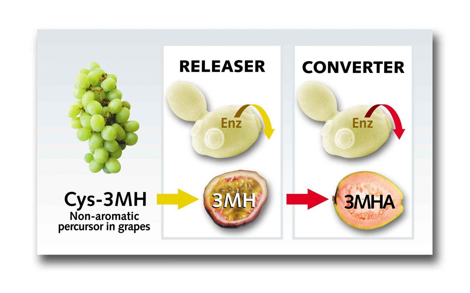 Releaser Converter